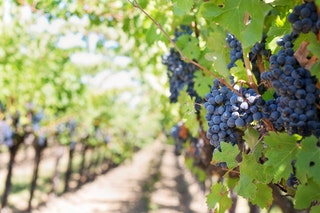 A bor készítés történelme